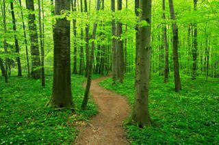Path-through-the-forest